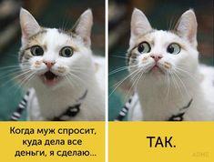 https://files2.adme.ru/files/news/part_120/1206260/7194060-15-650-a542d8629a-1481541959.jpg