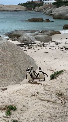 Places To Travel, Places To See, Boulder Beach, Africa Destinations, Les Continents, Cape Town South Africa, South Africa Safari, Tier Fotos, Travel Aesthetic