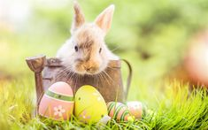 Spring is here and Easter is on the way! We welcome you to celebrate with Easter Bunny Photos 🐰 From April drop by the upper level… Easter Bunny Pictures, Bunny Images, Pagan Origins Of Easter, What Is Easter, Easter History, Easter Activities, Egg Hunt, Happy Easter, Easter Eggs