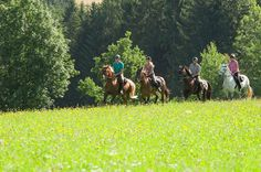 Das #Granithügelland beim #Reiten entdecken. Weitere Informationen zu #Reiturlaub im #Mühlviertel in #Österreich unter www.muehlviertel.at/reiten - ©Oberösterreich Tourismus/Erber Dogs, Animals, Sports Activities, Tourism, Bicycling, Horseback Riding, Animales, Animaux, Pet Dogs