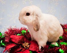 pets rabits | Pet Rabbit
