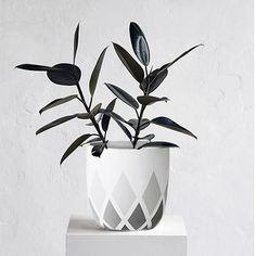 Harlequin Planter Pot