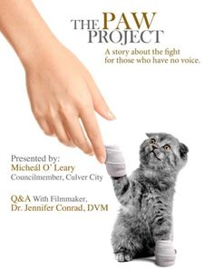 The Paw Project Treats Cats Injured by Declawing | Catster