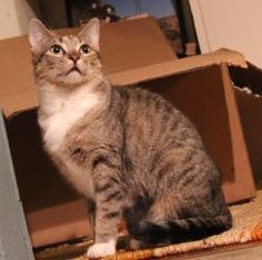 1000 images about cats adoptapet petfinder petharbor on