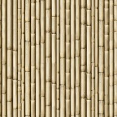 Textures   -   NATURE ELEMENTS   -  BAMBOO - Bamboo texture seamless 12266