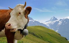 Murren, Switzerland is an adorable, fairy-tale-looking town