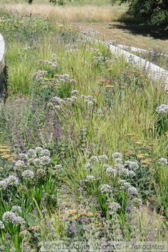 Sesleria autumnalis, Allium Summer Beauty, Salvia Purple rain, Achillea Walther Funcke, Euphorbia - Adam Woodruff and Associates Garden Shrubs, Landscaping Plants, Garden Plants, Landscaping Austin, Landscaping Jobs, Meadow Garden, Rain Garden, Gravel Garden, Plant Design