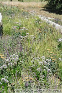 Sesleria autumnalis, Allium Summer Beauty, Salvia Purple Rain, Achillea Walther Funke, Euphorbia Bonfire.  Adam Woodruff, garden designer.