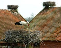 Polska bociania wieś - Żywkowo My Heritage, Rustic Design, Hungary, Pet Birds, Country, House Styles, Storks, Inspiration, Holidays