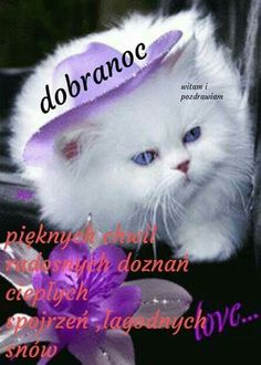 Dobranoc I Thought Of You Today, Google Images, Places To Visit, The Originals, Cats, Movie Posters, Animals, Good Night, Cutest Pets