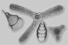 Radiolarians from Barbados