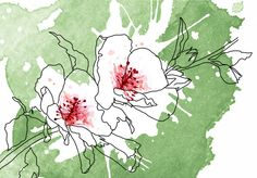 Floral - Giorgia Bressan Illustration