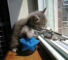Funny Animals with Guns Pictures 2011   Funny Animals
