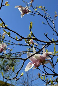 Photo from Apr 25, 2013 by marcos stafne, via Flickr