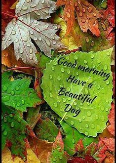 Good Morning Rainy Day, Good Morning World, Good Morning Sunshine, Good Morning Picture, Good Night Image, Good Morning Good Night, Good Morning Beautiful Pictures, Good Morning Images Flowers, Good Morning Images Hd