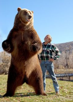 Doug Seus poses alongside the 8ft 6in Bart 2 on his ranch in Heber City, Utah. For the last four decades, Doug and wife Lynne have shared their ranch in the the Heber Valley, Utah, with their four bears: Bart the Bear 1, who died of cancer in 2000, brother and sister team Bart 2 and Honey Bump, and Tank