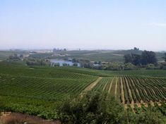 Artesa Vineyards & Winery - Napa - Reviews of Artesa Vineyards & Winery - TripAdvisor