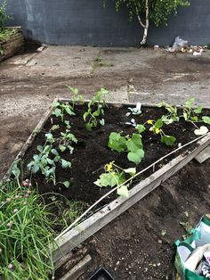 My triangle garden bed. Raised Garden Beds, Raised Beds, Garden Boxes, Growing Vegetables, Vegetable Garden, Triangle, Gardening, Plants, Window Boxes
