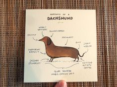 A lovely card of my original illustration Anatomy of a Dachshund, from my Anatomy series.    This high-quality printed card can either be