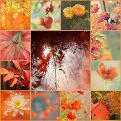 'Orange is the happiest color' Frank Sinatra Collages, Colour Schemes, Color Combos, Color Palettes, Color Collage, Beautiful Collage, Colour Board, My Favorite Color, Fall Halloween