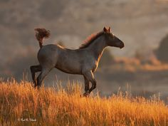 Morning of the Wild Horse by Paul Klenck, at Theodore Roosevelt Natl Park