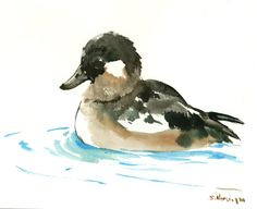 Ruddy Duck, original watercolor painting, ducks, duck art, duck painting