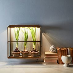 """That means that if you are super committed to growing a bunch of succulents in your windowless bedroom, you're going to have to consider using an artificial light like this <a href=""""http://go.redirectingat.com?id=74679X1524629&sref=https%3A%2F%2Fwww.buzzfeed.com%2Femilyshwake%2F13-ways-to-not-kill-your-indoor-plants&url=https%3A%2F%2Ffood52.com%2Fshop%2Fproducts%2F3421-brass-grow-anywhere-growhouse&xcust=4430107%7CBFLITE&xs=1"""" target=""""_blank"""">one</a>."""