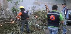 Azcapotzalco atendió contingencias por fuertes vientos