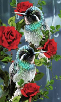 Flying Jewels, God`s Awesome & Gorgeous Creation. Beautiful Flowers Pictures, Flower Pictures, Beautiful Butterflies, Beautiful Roses, Big Bird, Small Birds, Colorful Birds, Vogel Gif, Coeur Gif