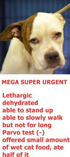 SUPER URGENT Manhattan Center SOPHIA – A1071731  FEMALE, BROWN / WHITE, PIT BULL MIX, 3 yrs OWNER SUR – EVALUATE, NO HOLD Reason PET HEALTH Intake condition ILLNESS Intake Date 04/27/2016 http://nycdogs.urgentpodr.org/sophia-a1071731/