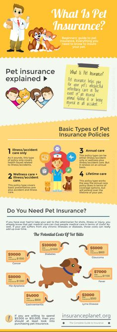 What Is Pet Insurance? http://insuranceplanet.org/what-is-pet-insurance Pet Insurance for Dogs & Cats. Pet insurance reimburses you on your veterinary bill when your pet is sick or injured.  Beginners' guide to pet insurance. Find information on what is covered and the best policies so you get the best pet insurance.