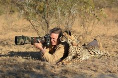 Cheetah with Nature Photographer - looks about right to me-ow! Tracking Radio-collar in evidence suggests this may have been on a reserve where the animal has become desensitized to humans.