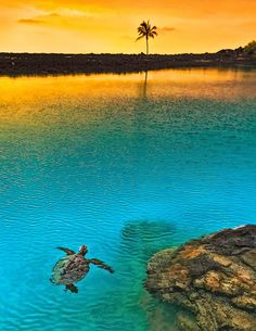 Stunning sunset at Kiholo Bay, Big Island of Hawaii