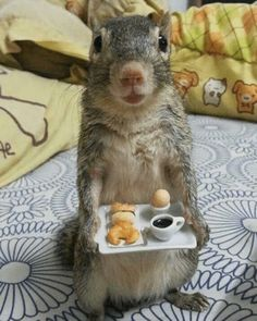 Good morning, the breakfast is ready … – Baby Ideas Cute Little Animals, Cute Funny Animals, Cute Squirrel, Squirrels, Squirrel Food, Cute Creatures, Funny Animal Pictures, Funny Squirrel Pictures, Cool Pets