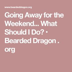 Going Away for the Weekend... What Should I Do? • Bearded Dragon . org