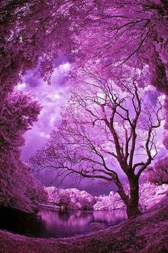 Mother Nature is the best artist. Simply beautiful- I'm in purple heaven~ Purple Sky, Purple Love, Shades Of Purple, Purple Trees, Purple Things, Purple Stuff, Plum Purple, Magenta, Pink