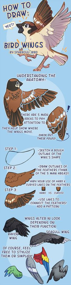 How to Draw Bird Wings by SPARROUUSupport the artist on Redbubble! to drawing birds How to Art Art Reference Poses, Design Reference, Drawing Reference, Drawing Techniques, Drawing Tips, Drawing Sketches, Drawing Ideas, Drawing Stuff, Sketching