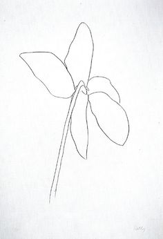 """Ellsworth Kelly, """"Cyclamen IV"""" 1964-65. Transfer lithographs. As a Color Field painter, Kelly was a leader of the Hard-Edge school, using sparse composition in which there was no foreground, background, or figuration. In his later works, he has explored shaped and adjoining canvases. Kelly has also investigated purity, form and shape through his celebrated prints and drawings of plants and leaves."""