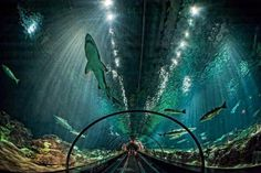 Amazing glass tunnel in Florida, USA