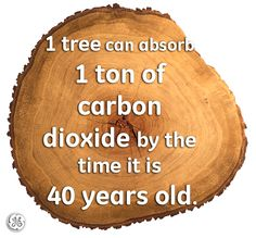 One tree can absorb 1 ton of carbon dioxide by the time it is 40 years old. Our Planet, Save The Planet, Planet Earth, Save Our Earth, Our Environment, Environmental Science, Environmental Change, Carbon Footprint, Earth Day