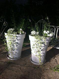 Nouvelles pôtées ..... blanches pour le mois de Juin !!!