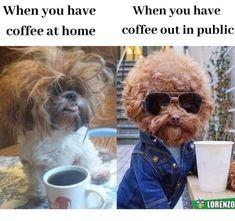 Funny Animal Jokes, Crazy Funny Memes, Really Funny Memes, Stupid Funny Memes, Cute Funny Animals, Funny Relatable Memes, Haha Funny, Animal Memes, Funny Dogs