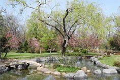 The japanese garden- Romania Bucharest Romania Bucharest, Japanese, Garden, Garten, Japanese Language, Lawn And Garden, Gardens, Gardening, Outdoor