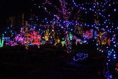 11. Rotary Botanical Gardens Holiday Light Show - Janesville