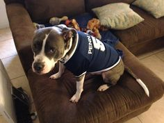 Archer doesn't like his Penn State shirt. It's too tight.