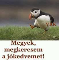 Everything Funny, Funny Video Memes, Haha, Motivational Quotes, Jokes, Animals, Minden, Rage, Animales