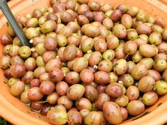 Olive sott'olio #ricettedisardegna #sardegna #sardinia #food #recipe Pickle Jars, Aglio, Preserving Food, Kimchi, Preserves, Italian Recipes, Pickles, Olive Oil, Buffet