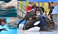 Unna the 18-year-old orca dies at SeaWorld San Antonio