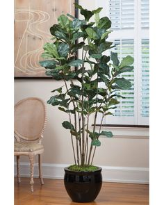 This is the fiddle leaf I was telling you about that we could just pit in a regular container or large basket. Lifelike Fiddle Leaf Fig Silk Tree with clusters of large leaves atop multiple slender trunks Artificial Plants And Trees, Artificial Tree, Artificial Flowers, Tall Indoor Plants, Clematis Trellis, Fiddle Leaf Fig Tree, Fiddle Fig, Silk Tree, Silk Plants