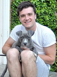 Hunger Games Star Josh Hutcherson Adopts a Pit Bull - Josh Hutcherson, one of the stars of the box-office smash, The Hunger Games, adopted a 3-month-old pit bull. The actor named the animal Driver, and pulled the 3-month-old pup from a Los Angeles County shelter via the Hands Paws Hearts rescue group.